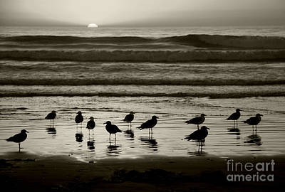 Birds On A Beach Art Print