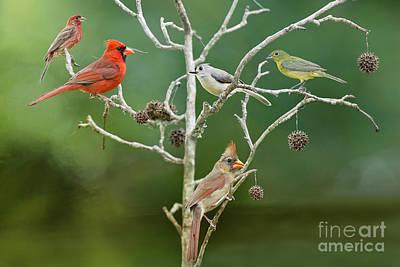 Tufted Titmouse Photograph - Birds On A Black Gum Branch by Bonnie Barry