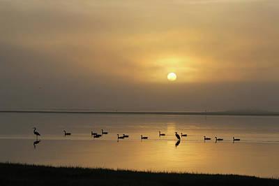 Photograph - Birds On A Hazy Day by Robert Banach