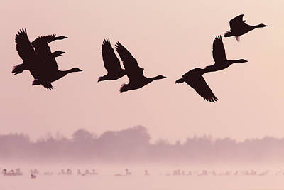 Birds On A Mission Art Print by Roeselien Raimond