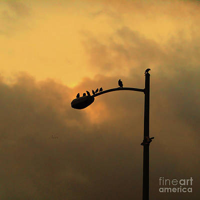 Photograph - Birds On A Post Amber Light Square by Felipe Adan Lerma