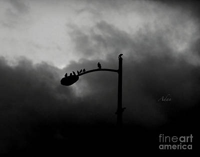 Photograph - Birds On A Post Bw by Felipe Adan Lerma