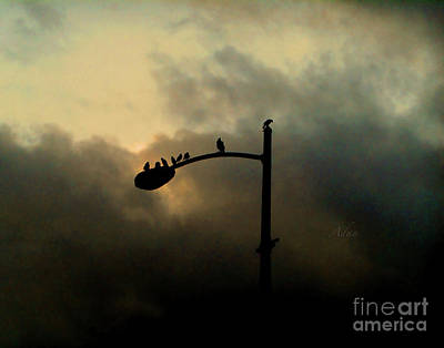 Photograph - Birds On A Post Changing Sky by Felipe Adan Lerma