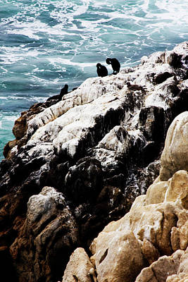 Point Lobos Photograph - Birds On A Rock by Alan Hausenflock