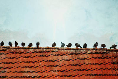 Photograph - Birds On A Rooftop by Sharon Kalstek-Coty