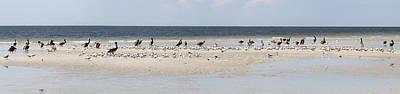 Light Photograph - Birds On A Sandbar Panorama by J Darrell Hutto