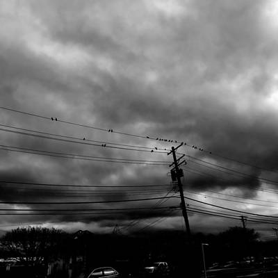 Photograph - Birds On A Wire 2018 by Chris Montcalmo