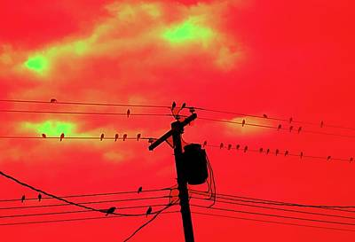 Digital Art - Birds On A Wire by Aliceann Carlton