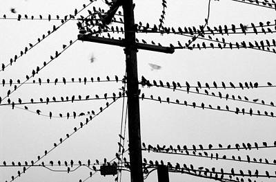 Birds On A Wire Art Print by Don Prioleau