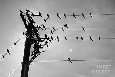 Birds On A Wire Art Print by Lionel Martinez