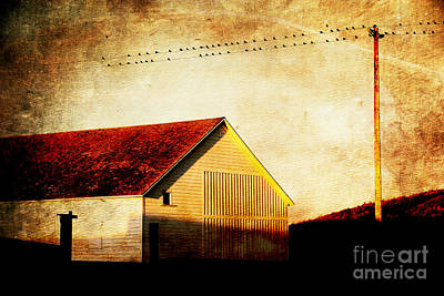 Photograph - Birds On A Wire . Photoart by Wingsdomain Art and Photography