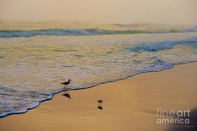 Photograph - Birds On Beach At Sunset by David Arment