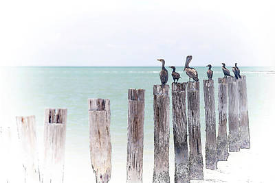 Tide Photograph - Birds On Posts Digital Art by J Darrell Hutto
