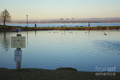 Gatineau Photograph - Birds On The Ottawa River by Scimat