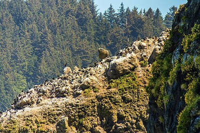 Photograph - Birds On The Rocks by Jonny D