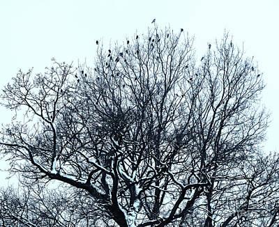 Birds On The Tree Monochrome Art Print