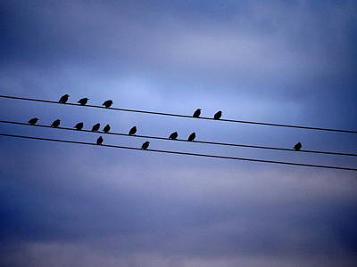 Photograph - Birds On The Wire by Richard Reeve