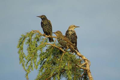 Birds-on-watch Art Print by Gordon Auld