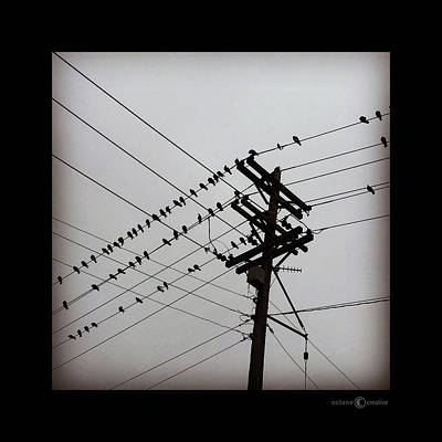 Photograph - Birds On Wires by Tim Nyberg