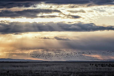 Photograph - Birds Over Burns by Belinda Greb