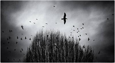 Birds Over Bush Art Print