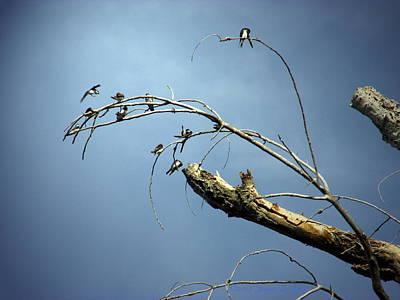 Photograph - Birds Perched In A Dead Tree One by Joyce Dickens