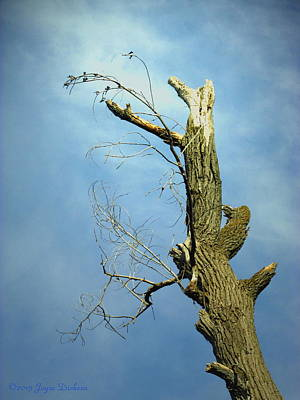 Photograph - Birds Perched In A Dead Tree Two by Joyce Dickens