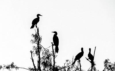 Birds Perched On Branches Art Print