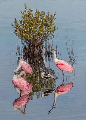 Photograph - Birds, Reflections, And Mangrove Bush by Dorothy Cunningham
