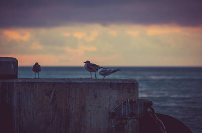 Photograph - Birds by Scott Meyer