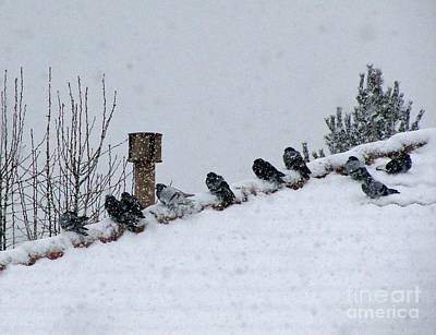 Photograph - Birds Seeking Warmth On Christmas Eve Morning by Phyllis Kaltenbach