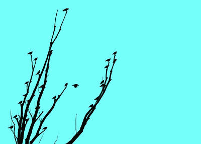 Photograph - Birds Silhouette Aquamarine by Jennie Marie Schell