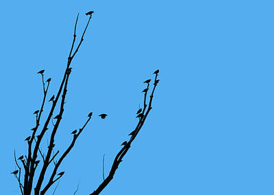 Photograph - Birds Silhouette Blue by Jennie Marie Schell