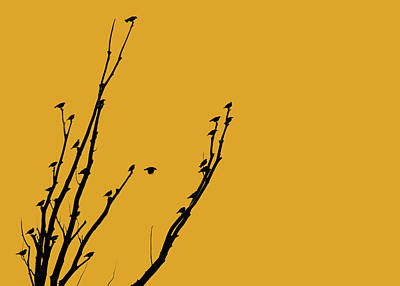 Photograph - Birds Silhouette Golden by Jennie Marie Schell