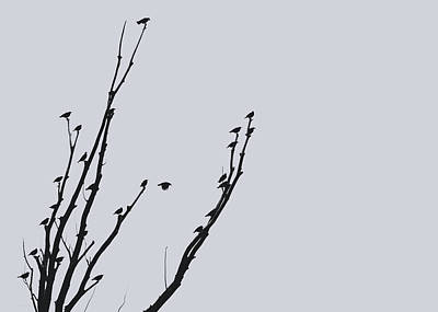 Photograph - Birds Silhouette Gray by Jennie Marie Schell