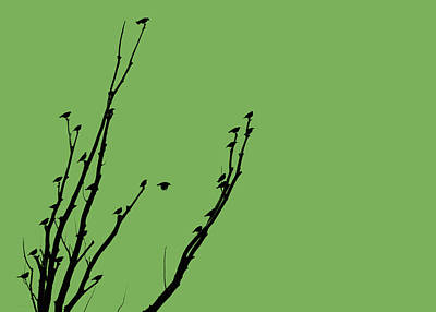 Photograph - Birds Silhouette Green by Jennie Marie Schell