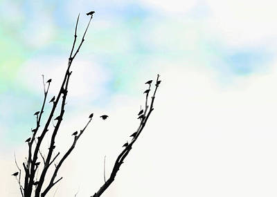 Photograph - Birds Silhouette In Tree Blue by Jennie Marie Schell