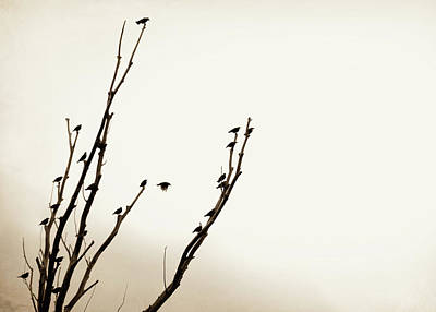 Photograph - Birds Silhouette In Tree Brown by Jennie Marie Schell