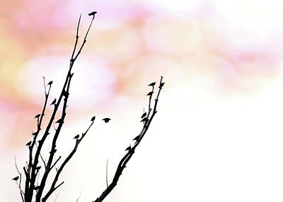 Photograph - Birds Silhouette In Tree Pink Sky by Jennie Marie Schell