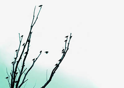 Photograph - Birds Silhouette In Tree Teal by Jennie Marie Schell