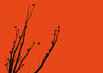 Photograph - Birds Silhouette Orange by Jennie Marie Schell