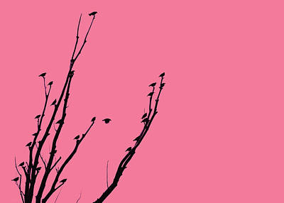 Photograph - Birds Silhouette Pink by Jennie Marie Schell