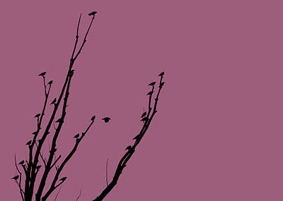 Photograph - Birds Silhouette Plum by Jennie Marie Schell