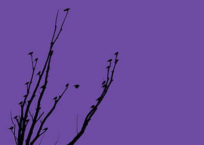 Photograph - Birds Silhouette Purple by Jennie Marie Schell