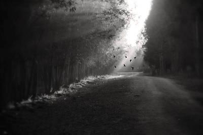 Path Photograph - Birds by Taner Kinar