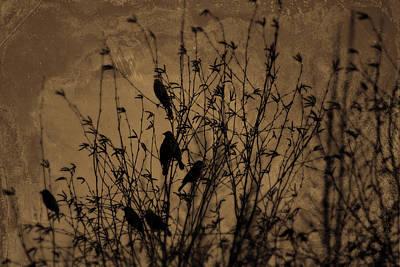 Photograph - Birds by Theresa Pausch