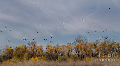 Photograph - Birds Upon The Sky by Elizabeth Winter
