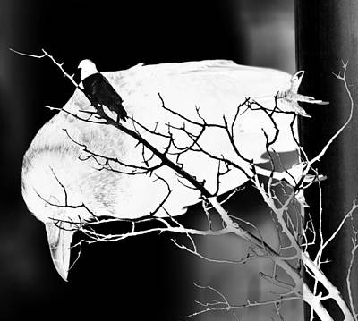 Photograph - Birds View Sin  by Jerry Cordeiro