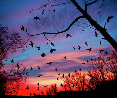 Photograph - Birds by Vladimir Kholostykh