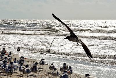 Photograph - Birds World by Frank Williams